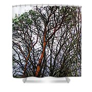 Winters Trees  Shower Curtain