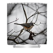 Winter's Tufted Titmouse Shower Curtain