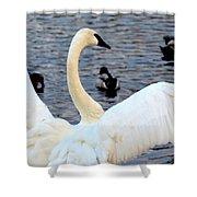 Winter's White Swan Shower Curtain