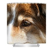 Wise Old Collie Eyes Shower Curtain