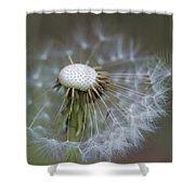 Wispy Dandelion Fluff Shower Curtain