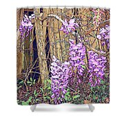 Wisteria And Old Fence Shower Curtain
