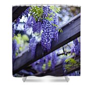 Wisteria Beams Shower Curtain