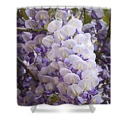 Wisteria Blooms Shower Curtain