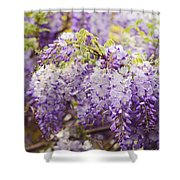 Wisteria Garden 2 Shower Curtain