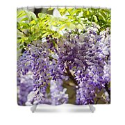 Wisteria Garden 9 Shower Curtain