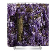 Wisteria Shower Curtain