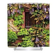 Wisteria On A Home In Zellenberg France 3 Shower Curtain