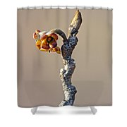 Witch Hazel Springtime Twig - Hamamelis Shower Curtain