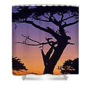 Witch Tree Monterey California Shower Curtain