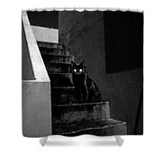 Witch's Cat In Moonlight... Shower Curtain