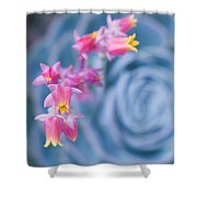 with affection - Echeveria glauca Shower Curtain