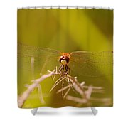 With Landing Gear Down  Shower Curtain