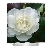 Withe Rose Shower Curtain