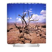 Withered Tree Paria Canyon Shower Curtain