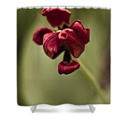 Withered Tulip Shower Curtain