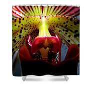 Within The Lady Slipper Shower Curtain