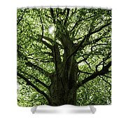 Witness Tree Shower Curtain