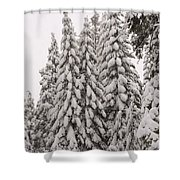 Wnter Snow At Shaver Lake Shower Curtain