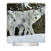 Wolf - Friend Shower Curtain