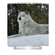 Wolf - Peaked Interest Shower Curtain