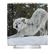 Wolf - Yoga Shower Curtain