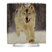 Wolf 1 Shower Curtain