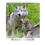 Wolf Of Minnesota Shower Curtain