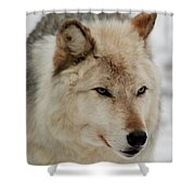 Wolf Expressions Shower Curtain