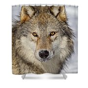 Wolf Face To Face Shower Curtain