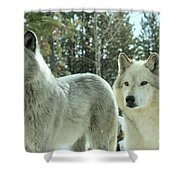Wolf Gaze Shower Curtain