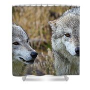 Wolf Glare Shower Curtain