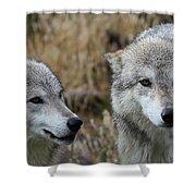 Wolf Glare II Shower Curtain