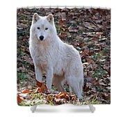 Wolf In Autumn Shower Curtain