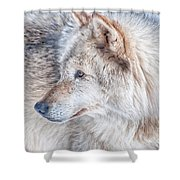 Wolf In Disguise Shower Curtain