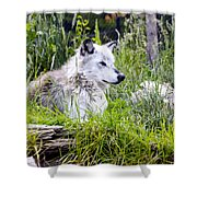 Wolf In The Grass Shower Curtain