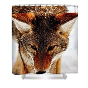 Wolf In The Wild Shower Curtain