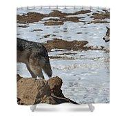 Wolf Pair Shower Curtain