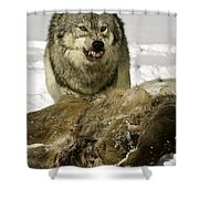 Wolf Protecting Kill Shower Curtain