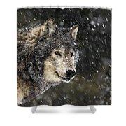 Wolf - Snow Storm Shower Curtain