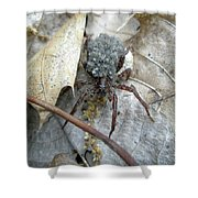 Wolf Spider And Spiderlings Shower Curtain