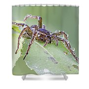 Wolf Spider In Dew  Shower Curtain