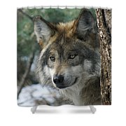 Wolf Upclose Shower Curtain