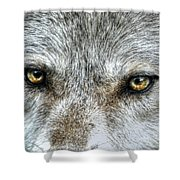 Wolf Wisdom Shower Curtain