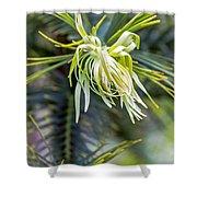 Wollemi Pine Shower Curtain
