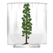 Wollemia Nobilis Prehistoric Tree Shower Curtain