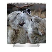 Wolves Playing Shower Curtain