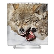 Wolves Rules Shower Curtain
