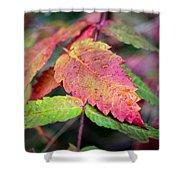 Wonder Leaf Shower Curtain
