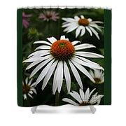 Wonderful White Cone Flower Shower Curtain
